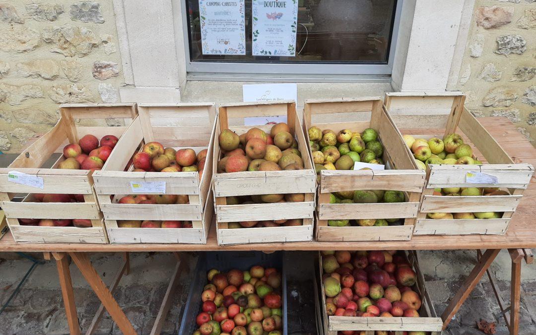Vente de pommes à couteau